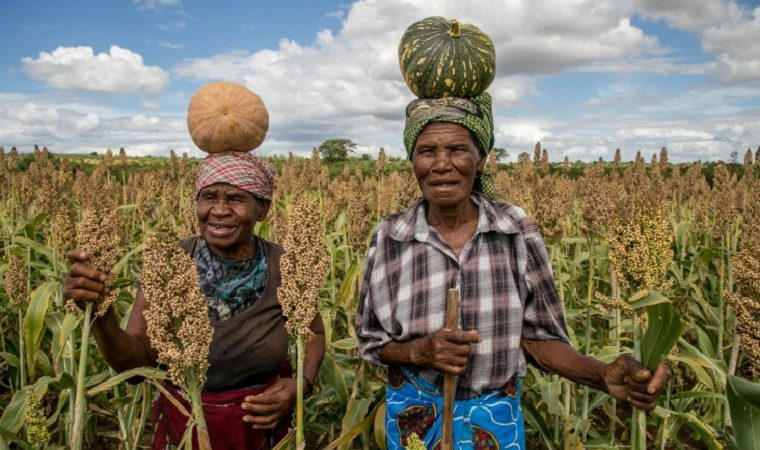 Who is really benefitting from the USAID US$19.8 million food insecurity project in Zimbabwe?