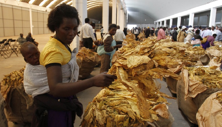 Zimbabwe tobacco sales hit all time high
